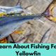Fishing for Yellowfin